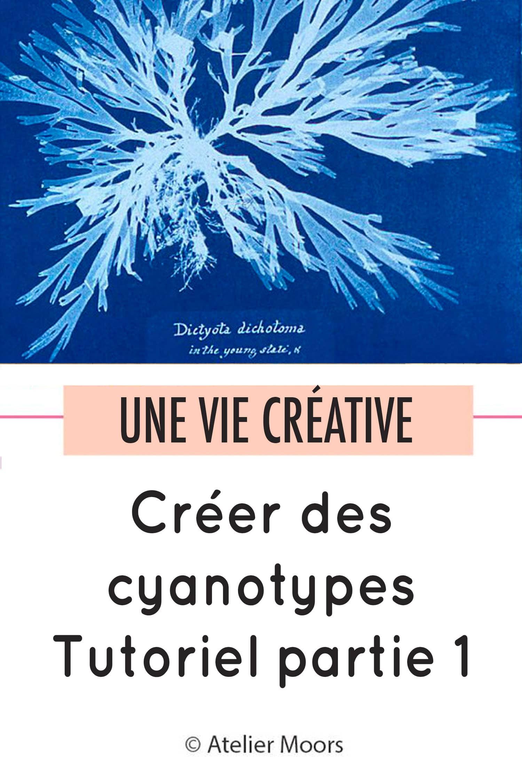 cyanotypes partie 1 pinterest