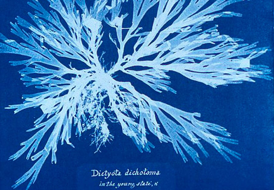 Faire des cyanotypes, créer avec le soleil (partie 1)